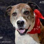 Miami-Dade Animal Services Adoptable Pets https://t.co/c1jHAEXYfU #miami https://t.co/tlaLz17fKE