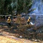⚠️ ATENCIÓN: conato de incendio forestal en el sector de Alangasí. Asiste #BomberosQuito. #EmergenciaCBQ https://t.co/mGj6VM2gy2
