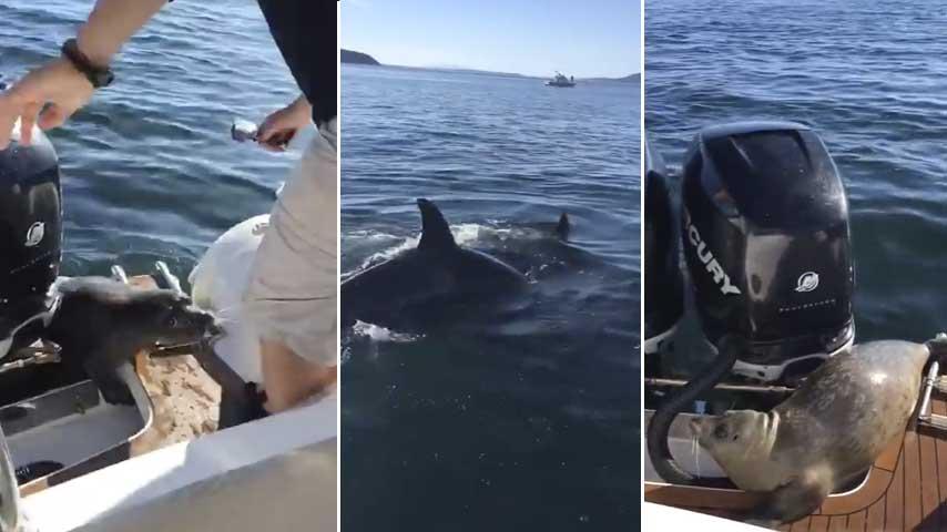 Foca sube a una lancha para escapar de unas orcas vía @laterceratv ...