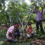 Boyacá, Nariño y Putumayo finalistas del Concurso Nacional de Cacaos Finos y Aroma de Oro https://t.co/60O3WxVI2Q https://t.co/I1hs1EgEYl