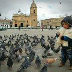 #FotoDelDía, la inocencia y dulzura de la niñez boyacense alimentando palomas, engalana el Casco Histórico de Tunja https://t.co/gL9Hn690SP