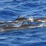 Nado con delfines podría ser prohibido en Hawaii: animales están estresados https://t.co/tNQpSynUW2 https://t.co/Xyzic422wV