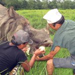 Chitwan rhino wounded by gunshots recovering | https://t.co/MSsjxYp6Vd https://t.co/HIxYAGs9VX