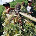 Por unanimidad aprobamos exoneración del ISV para los insumos y equipo agrícolas, Iniciativa del Pdte .@JuanOrlandoH https://t.co/VS0RvfYqHX