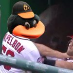 Oriole Bird got no chill 😂 https://t.co/tb2qLSfBZr
