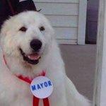 Pueblo de Minnesota reelige a perro como alcalde honorario. ► https://t.co/lEACL9Tiql https://t.co/E6zWHwk3K9