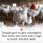 Punjab govt to give schoolgirls four hens, one cock and a cage to teach kitchen skills https://t.co/f1RAQt8tPA https://t.co/YzuqwMqUol