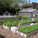 Our market gardens are open for volunteers today - help us grow Hackney Salad! https://t.co/0u6qnxaWsO https://t.co/tii4O0GT7O
