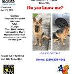 This girl was found near Tezel Rd & Old Tezel Rd #SanAntonio #LostDog #FoundDog https://t.co/YjfPjf4yYc