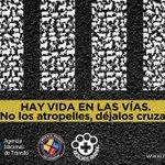 .@ANT_ECUADOR impulsa campaña que impulsa el respeto de los animales en las vías ► https://t.co/l8qnSc2HFN https://t.co/Lc8eadraeo