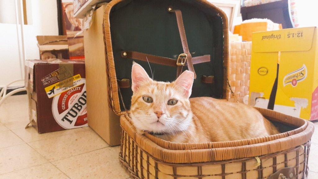 חתלתול חמוד מאד מחפש בית נעים וספה לתפוס. הוא מחוסן, מעוקר, מטופל ואהוב. צריך לעבור עקב בעיות אלרגיה. בחייאת עזרו https://t.co/3aFBcKA7B4