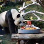 ترى اليوم عيد ميلاد الباندا ...  ما حد أحسن من حد 😊 https://t.co/U1iccB0M2U