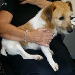 RT @EastbournePol: Recognise this Jack Russell? We think she was stolen. Call us 101 quote 752 of 25/8 https://t.co/lOwjgjdS44