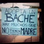 @MarcosAguilar tú tienes la obligación moral de adoptar uno... Te damos chance de escoger primero! https://t.co/OcuKibQqml
