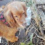 #puq perro encontrado herido en #barrioprat alguien lo reconoce? @AlbiLuzz  @Oscar_Espana_B @butniko @lorenalba_puq https://t.co/3YGvW2wI6K