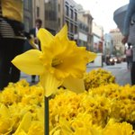 Our terrific @rundlemall volunteers #DaffodilDay volunteers! https://t.co/YQYbSunJPG