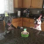 We adopted Bleu from the San Bernardino shelter one year ago today so we decided to throw him a birthday party 🐶💙🎉 https://t.co/vinVdnPq6D