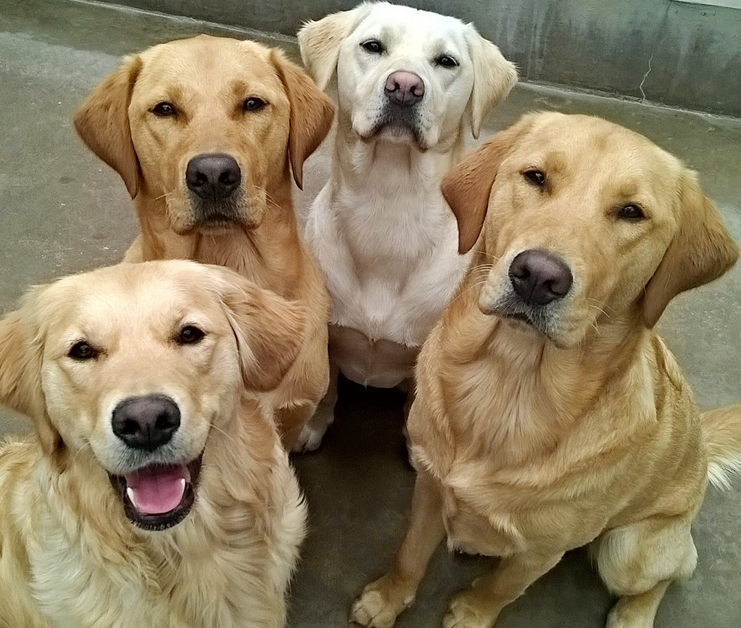 Happy #NationalDogDay from all our our amazing guide dogs! https://t.co/FREcqzwEq2