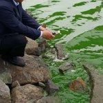 창원시민들의 수돗물을 취수하는 낙동강 현장을 다녀왔습니다. 함안보 아래 본포취수장 앞 강물을 보니 녹즙 그 자체입니다. 입이 다물어지지 않습니다. https://t.co/pTqfA3aCWm
