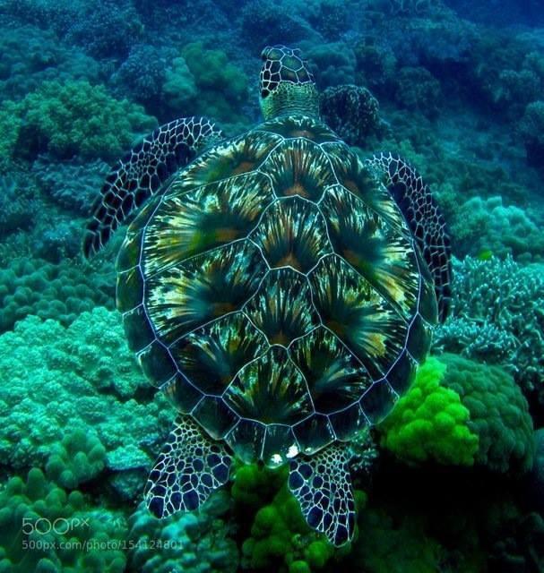 Turtle's shell looks like a fireworks display. https://t.co/6z0Yel9BA5