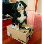 Share your #PrimePet photos with us in celebration of #NationalDogDay and your pup might be featured! Use #PrimePet. https://t.co/n8aZlNUcdN