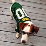 When gameday meets #NationalDogDay 😎🐶 Do you have a #PackersPup? Tweet your photo! https://t.co/yehYyRF25Q