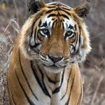 #mondaymotivation find a little time to protect #wildtigers #donate today at https://t.co/Z4ZLA0Yr5X https://t.co/Lbsia9KY3l