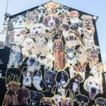 Its #NationalDogDay take a trip to see some of Brightons canine residents on Kensington Street! https://t.co/X55PpWn3nk