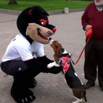 Cats and dogs can get along! Send us photos of your dog in #Bearcat gear for #NationalDogDay 🐶🐾 https://t.co/MXzl9JRlen