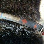 迷い犬保護してます。 8月23日千葉県柏市にて保護 8月7日に千葉県八千代市で保護されたサイトを見つけました。そこからまた脱走したみたいです!本拠地が不明困ってます。 #拡散希望 #迷い犬保護 #千葉県八千代市 #千葉県柏市 https://t.co/TVKRs0q1Ah