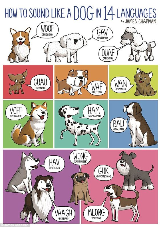 Happy #NationalDogDay! This is what dogs sound like in different languages. #woof https://t.co/rcuQ2HL3sp