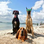 Beach this weekend??? 🐶🌞🌴 The cutest dogs in #Miami 😍 #NationalDogDay https://t.co/cvRNQpa0p3