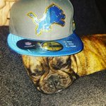 In honor of #NationalDogDay, take a look at some of our favorite 🐕 #Lions fans. 📷s: https://t.co/ctbtERP19q https://t.co/YS8yM3qtAb