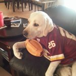 Did somebody say #NationalDogDay? 🐶 Send in pics of your #Redskins pups, well RT our favorites! #HTTR https://t.co/egYqRIqUPq