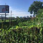 Our City. Our food. Battles Street. #CommunityGarden #Hartford #HartfordGrown #localfood https://t.co/IjF0rFMTw3