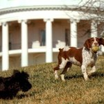 🐶 Need a lunch break? A photo gallery of presidential pups, other pets for #NationalDogDay https://t.co/ibdjEUBGhE https://t.co/Voi4J40crl