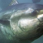 Annual tuna competition set for Sept. 8 https://t.co/CWPgWEqZvC #pei https://t.co/aVTfjt5PE8