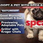Previewing @SPCACincinnati pets & grillin with @kroger chefs on Good Morning Cincinnati 5-8am Saturday! @Local12 https://t.co/FUg7Q6S3mI