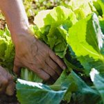 P.E.I. gardeners being asked to donate a row to food bank   https://t.co/uiBw2jw983 #pei https://t.co/ihJEZh2J0S