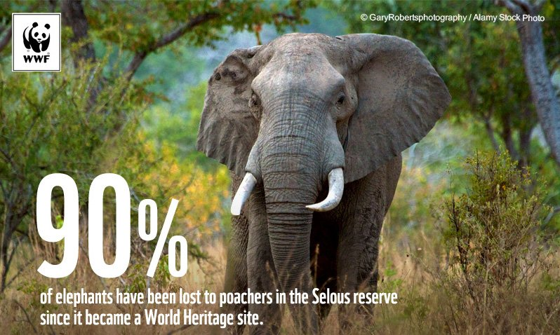 RT @WWF: Since becoming a World Heritage site, Selous has lost 90% of its ???? #SaveOurHeritage https://t.co/P6HfO7pzZk https://t.co/WVKPZRlqRb