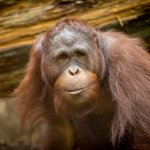 Meet #PDX organizations working toward positive change in Borneo, 9/13: https://t.co/To8hcFYHRP https://t.co/SznOh3a2NJ