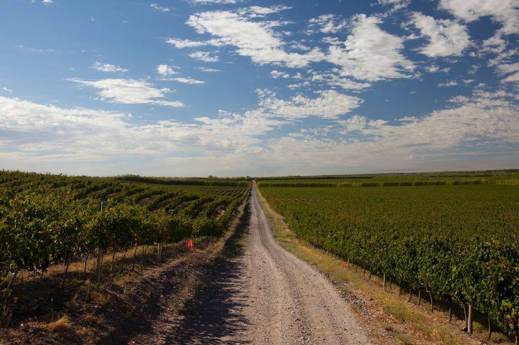 DATO: Dicen los que saben y los que la vendimiaron,  que la cosecha 2016 fue LA MEJOR DE LA HISTORIA en Nequén https://t.co/Qi54wyUBiW