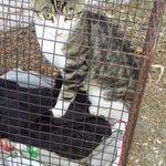 Salvi Micia e Giacomino gatti zia di Natascia a #pescaradeltronto ora a Roma grazie a #protezionecivile #terremoto https://t.co/1gr3LE02rW
