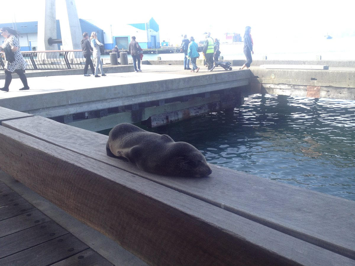 Look who got caught napping on the job down at the Wellington waterfront this afternoon! https://t.co/zroy4I9hq0