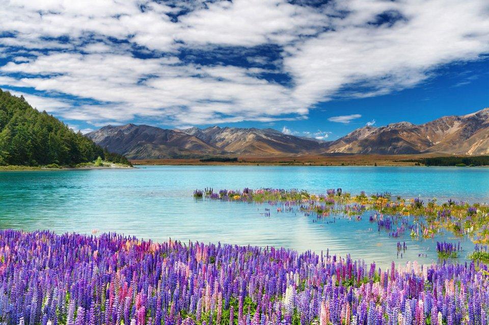 Lake Tekapo In #NewZealand | Photography by ©Pichugin Dmitry https://t.co/x7CNk4W7Mi