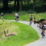 Phoenix Park deer were not letting a triathlon get in their way #ohdeer #dct16 https://t.co/LYQMoq7WSX