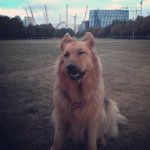 #cheesygrin #sightseeing #london #greenwich #SMILE #GSD #handsomeboy @visitlondon @TheO2 @VisitGreenwich https://t.co/2YZv3BVlBy