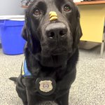 "When I said,""Will work for treats"" this isnt what I had in mind @reginapolice @PADSdogs #workingdogproblems #yqr https://t.co/UrG0SZQKJA"