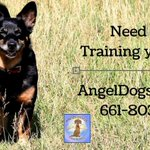 We can train your dog to be an Angel. https://t.co/mssW1yyJqO