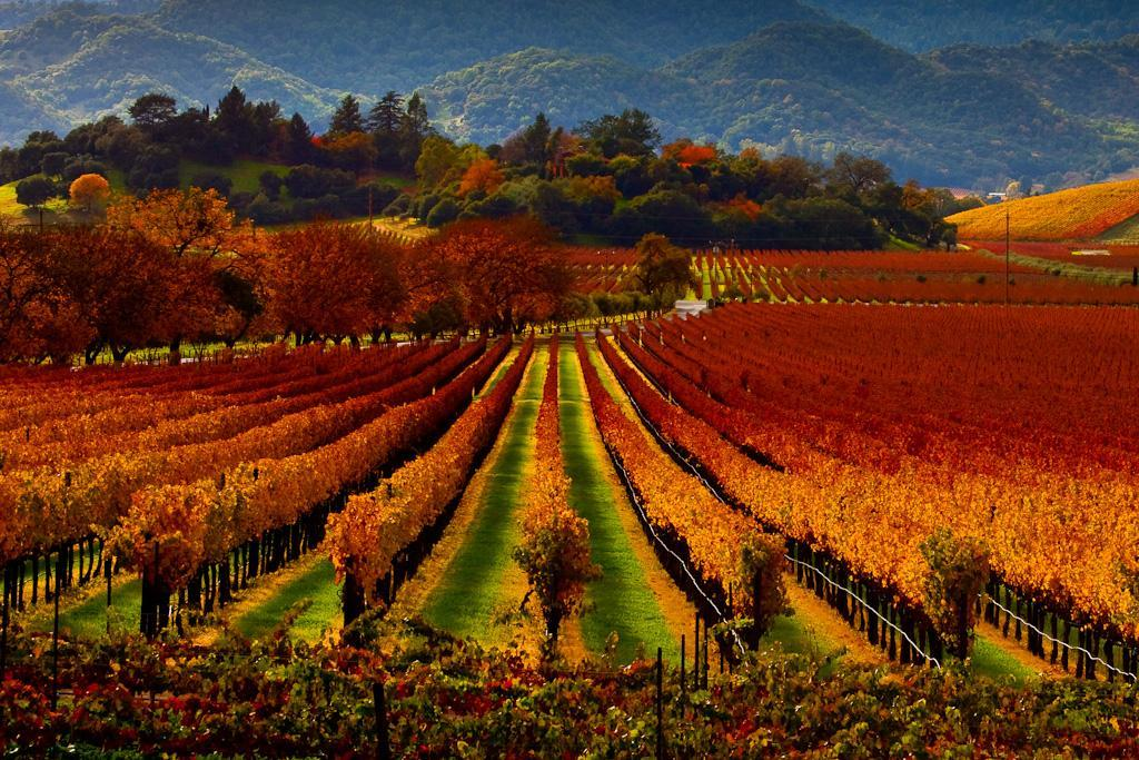 Regusci Winery, Napa Valley, #California | Photography by ©Malcolm Carlaw https://t.co/Lj9TAXVenN